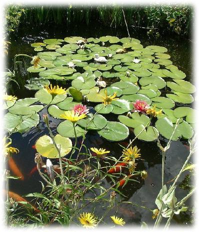 Garden design bassins - Petit bassin d eau dijon ...